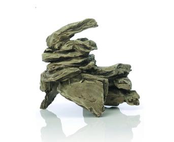 Muscheln und Gestein