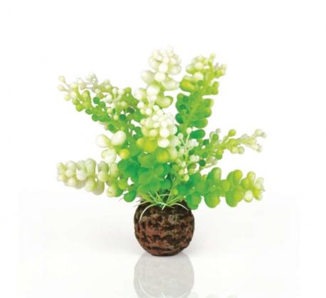 biOrb Aquarien Caulerpa grün