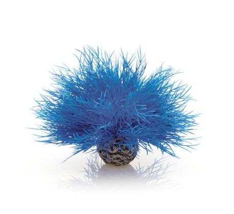 biOrb Aquarien Seelilie blau