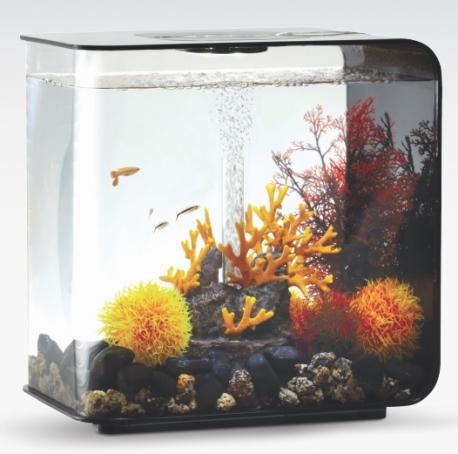 biOrb Deko Rezept 61105 für 30L Aquarien