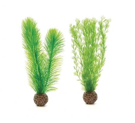 biOrb Federfarn Set S grün
