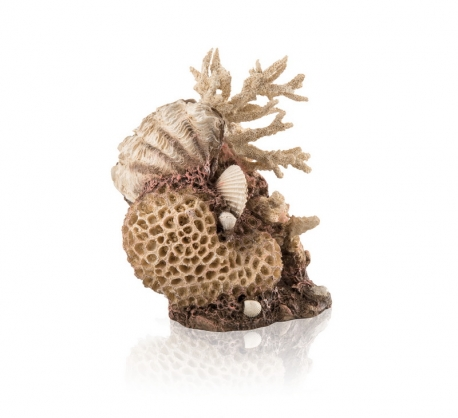 biOrb Korallen-Muschel Ornament natural
