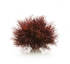 biOrb Aquarien Seelilie dunkelrot
