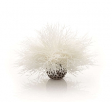 biOrb Aquarien Seelilie weiß