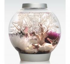 biOrb Deko Rezept 61103 für 15L Aquarien