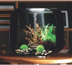 biOrb Deko Rezept 61106 für 30L Aquarien