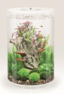 biOrb Deko Rezept 61400 für 30L Aquarien