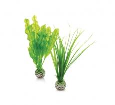 biOrb Pflanzen Set S grün