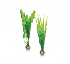 biOrb Pflanzen Set M grün