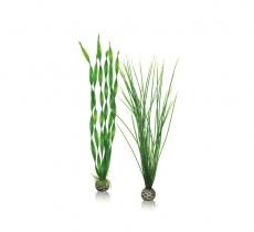biOrb Pflanzen Set L grün