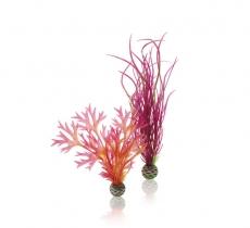 biOrb Pflanzen Set M rot & pink