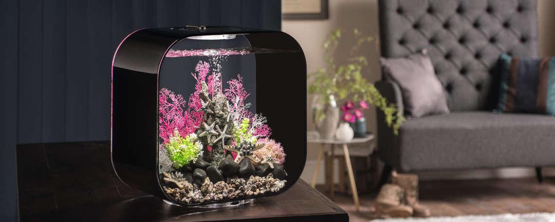 BiOrb Aquarium   Alle Modelle Auf Biorb24.de Günstig Kaufen!